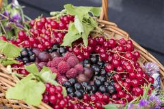 summer fruits - stock photo