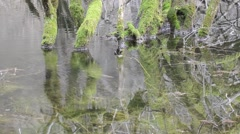 Reflection trees in the water, Sant 'Agostino lake, Italy Stock Footage