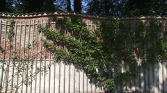 Crinkle crankle garden wall with fruit trees + pan - medium shot Stock Footage
