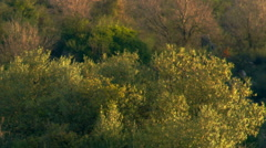 A vegetated hillside in the morning shot in Israel. Stock Footage