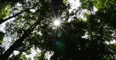 Amazon Rainforest, Brazil Stock Footage