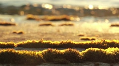 Rack focus shot of moss on a sunny rocky shore Stock Footage