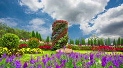 Beautiful flower garden in winter in northern Thailand. - stock footage