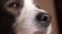 Funny Dog Face Closeup - stock footage