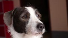Cute Dog Snout Closeup - stock footage