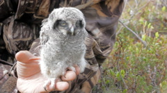 Little fluffy chick owl is located on human hand Stock Footage