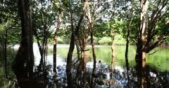 Stock Video Footage of Wetland in Amazon, Brazil