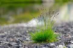 Tuft of grass between the stones - stock photo