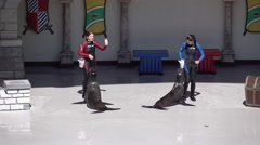 Two Performing California Sea Lions With Their Trainers - stock footage