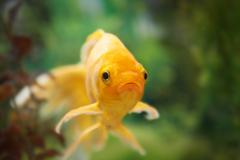 Colorful fishes in aquarium - stock photo
