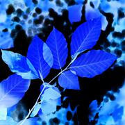 Abstract blue leaves - stock photo