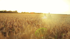 Young beautiful couple bride and groom holding hands running on the wheat field Arkistovideo