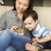 Smiling woman with a guinea pig sitting on her lap her young son watching. Stock Photos