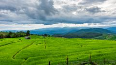 Terraced Paddy Field in Mae-Jam Village , Chaingmai Province , Thailand Stock Photos