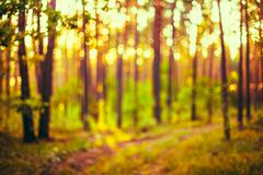 Abstract Autumn Nature Green and Yellow Colors Natural Blurred F - stock photo