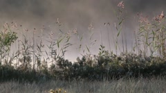 Fog moving behind swaying reeds in soft morning light Stock Footage