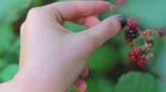 Collecting Blackberries Stock Footage