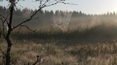 Spiderwebs hanging on a branch on early morning Stock Footage
