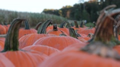 Closeup of Pumpkins with Stems Stock Footage