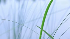 Wet grass and sedge after rain - stock footage