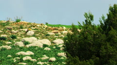 Video of a lone tree in a rocky meadow shot in Israel. - stock footage