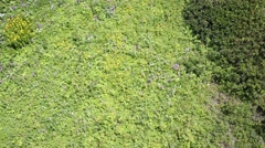 Green herbs and wild flowers in mountains. Top view Stock Footage
