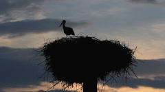 Mother stork guarding baby stork from nest , dark evening, keeping safe Stock Footage