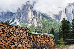 pile of tree trunks - stock photo