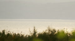 Yellow flowers on the Sea of Galilee shore shot in Stock Footage