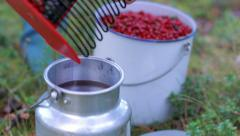 Berry picker pouring lingonberries into a metallic bucket Stock Footage