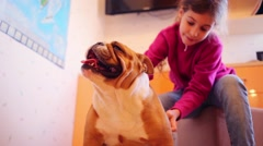 Pretty girl touches english bulldog in room. Focus on dog Stock Footage