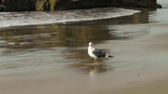 Sea Gull on the Beach Stock Footage