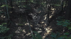 Wooded Valley static shot moving shadows Stock Footage