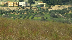 Video panorama of an almond orchard shot in Israel. Stock Footage