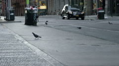 Pigeons walking around in morning on Spring Street - birds SoHo Manhattan NYC 4K Stock Footage
