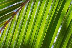 Background of palm leaves close up Stock Photos