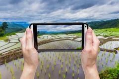 Hand taking picture with mobile at Green Terraced Rice Field in Chiangmai, Th - stock photo