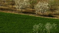 Video of an orchard and fields shot in Israel. Stock Footage