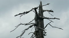 Dead tree with fast moving clouds. Air pollution. Timelapse Stock Footage