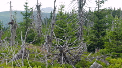 Dead trees. Air pollution. Acid rains. Stock Footage