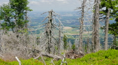 Dead trees. Co2 and So2 emission. Acid rains. - stock footage