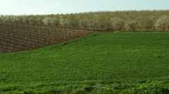 Video of almond orchards and a field shot in Israel. - stock footage