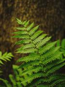 Close up of fern growing in forest Stock Photos