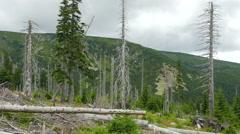 Dead trees. Air pollution. Acid rains. - stock footage