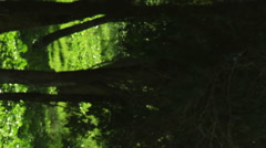 Video panorama of a forest shot in Israel. Stock Footage