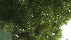 Video of a Mount Tabor forest shot in Israel. - stock footage