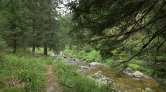 A walk on the riverside, Hunedoara Stock Footage
