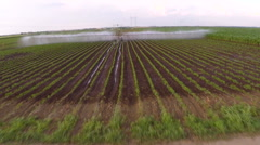 Irrigation of paprika field in spring. Aerial footage. - stock footage