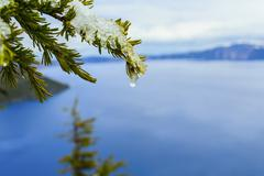 Close up of melting snow on tree branch over Crater Lake, Oregon, United States Stock Photos