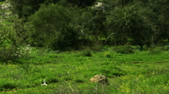 Video of a forest and meadow shot in Israel. Stock Footage